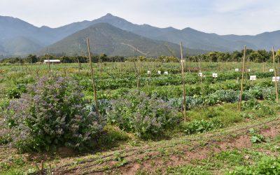 Dr. Marco Nuti dictará curso sobre Agricultura regenerativa en centro Ceres