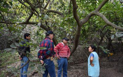 Equipo Ceres visita núcleo productivo de chirimoyos (Annona Cherimola Mill.) en la localidad de Cumbe, Perú.