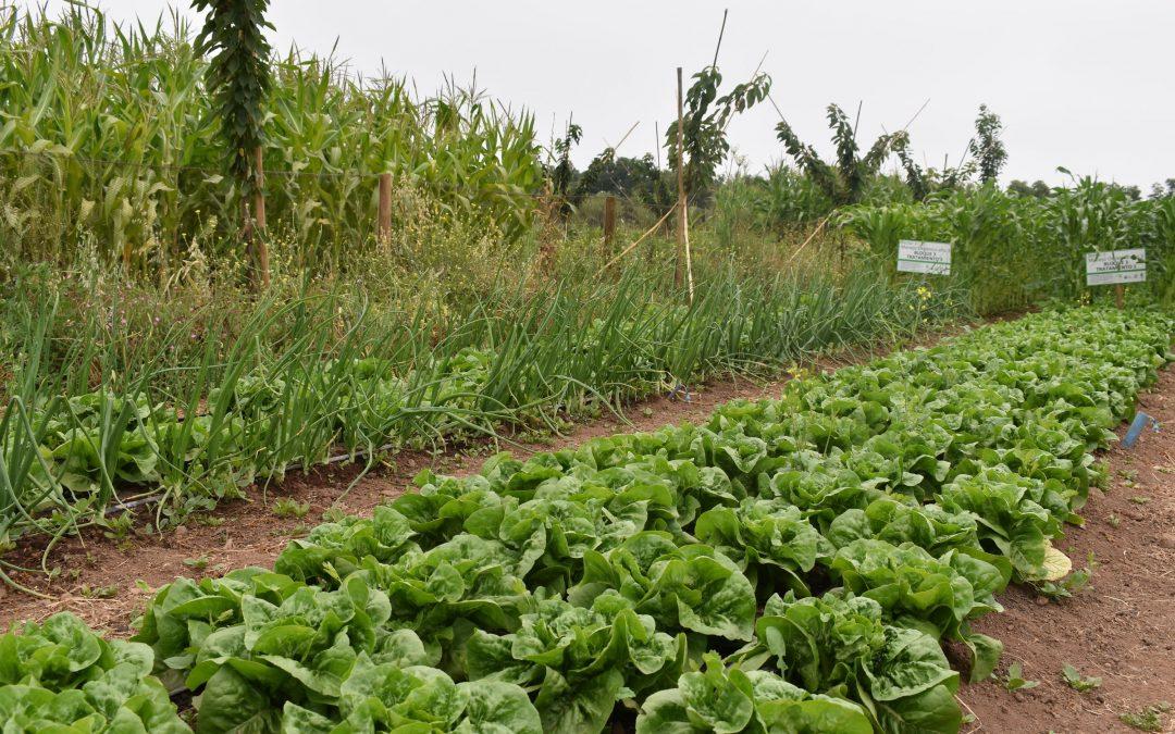 Ph. D Miguel Altieri dictará curso sobre agricultura agroecológica en Centro Ceres