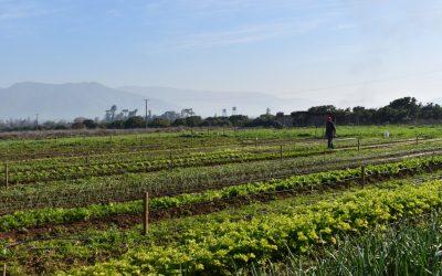 Centro Ceres se adjudica fondo de Fortalecimiento a Centros Regionales mediante Proyectos I+D Ciencia-Territorio de CONICYT, con iniciativa que busca la disminución de enfermedades en hortalizas mediante sistemas de policultivo bajo manejo ecológico.