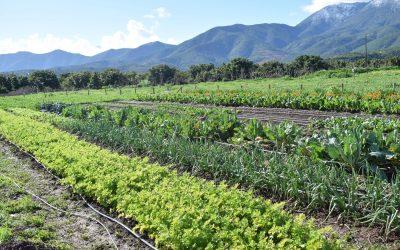CORE Valparaíso aprueba proyecto de red de núcleos regionales en horticultura ecológica