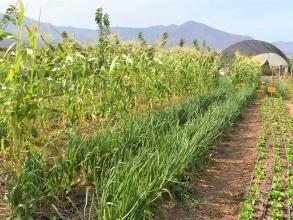 Expertos internacionales visitan Quillota con curso sobre Restauración Agroecológica