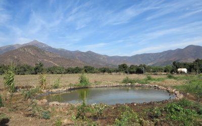 Implementación de la Unidad demostrativa agroecológica de Ceres.