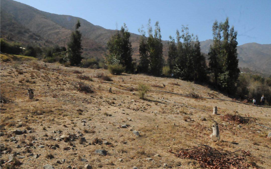 Programa PTDR desarrolla estrategia de restauración ecológica con enfoque geomorfológico para laderas degradadas
