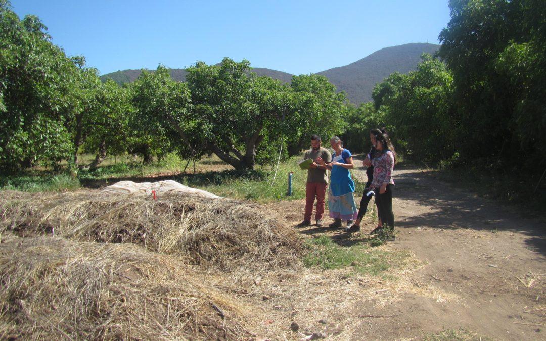 Columna: Programa RBS investiga consorcios microbianos para revitalizar suelos de sistemas agrícolas en regiones mediterráneas