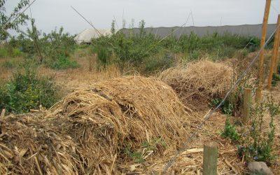 Consorcios microbianos: funciones ecosistémicas para una agricultura sustentable