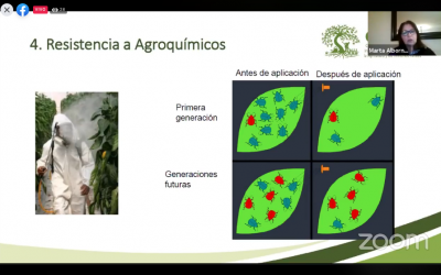 Centro Ceres facilita taller online sobre manejo sanitario sostenible a pequeños agricultores de Perú