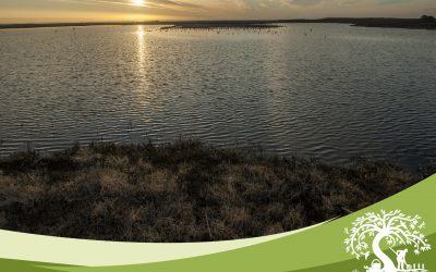 Ciclo de Coloquios Ambientales revalorizarán Humedal de Concón con proyecto Ciencia Pública