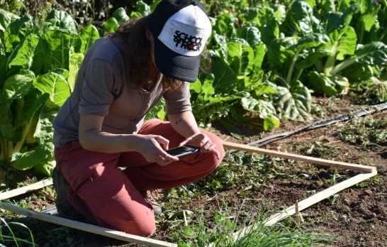 Proyecto Biopatch avanza a paso firme en la recuperación de equilibrio biológico y bioquímico del suelo