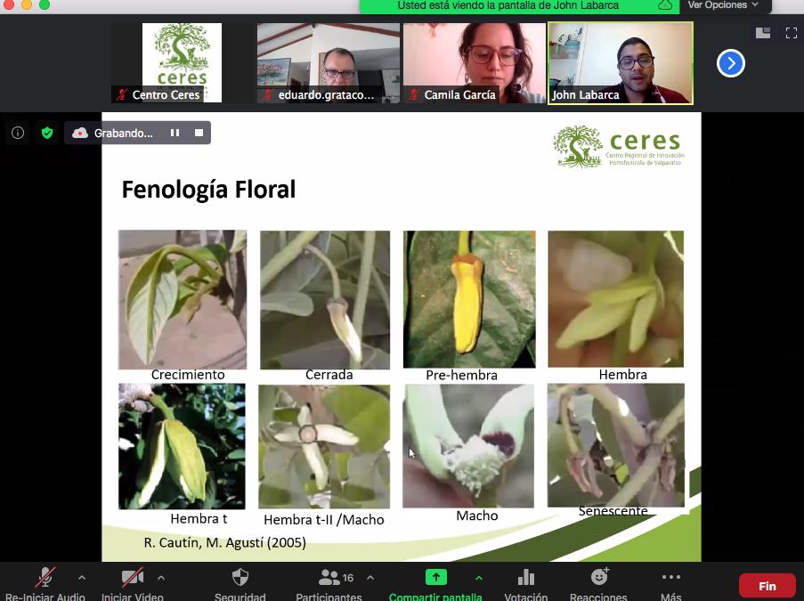 Centro Ceres facilita talleres online para aumentar eficiencia de polinización natural en chirimoyos