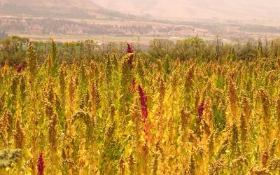 Especialistas llaman a participar en el segundo congreso chileno de Agroecología